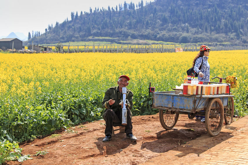 Rapeseed flowers of Luoping in Yunnan China and local man ASIA Backpack Bees Casual Clothing China Full Length Honey HoneyBee Landscape Leisure Activity Lifestyles Luoping Minority Nature Outdoors Plant Rapeseed Rapeseed Blossom Rapeseed Field Rural Scene Sky Tradition Yellow Yunnan Yunnan ,China