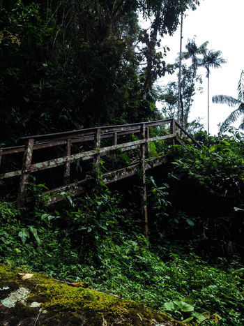 Beauty In Nature Branch Brazil Bridge Bridge - Man Made Structure Connection Day Forest Green Color Itatiaianationalpark Nature Non-urban Scene Outdoors Plant Rio De Janeiro Sky South America Tranquil Scene Tranquility Travel Travel Destinations The Secret Spaces