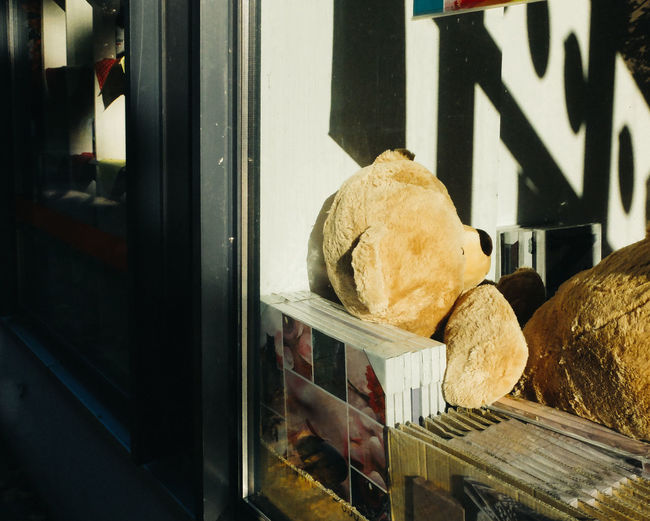 Teddy Bear And Frames At Window Display