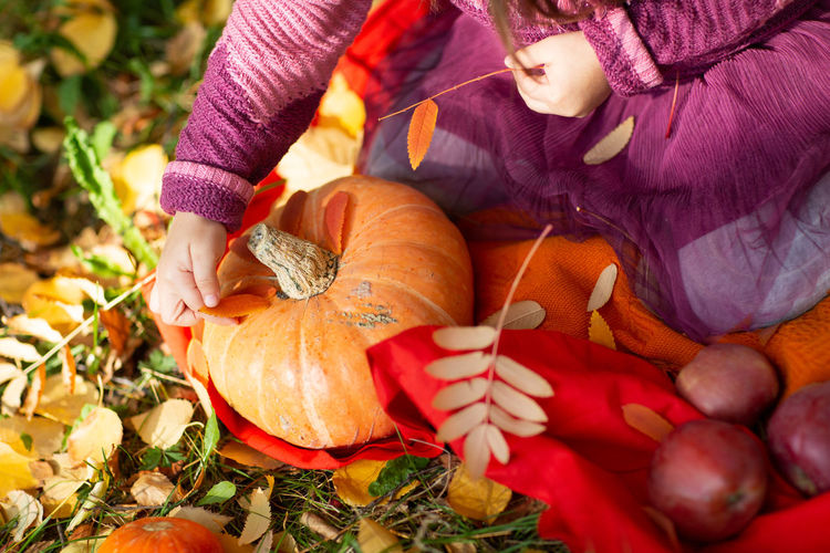 High angle view of girl holding pumpkin in autumn leaves