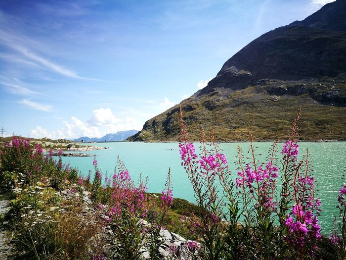 Beauty. 🍃🌼Tree Beauty In Nature Multi Colored Flower Cloud - Sky Nature Day Outdoors Summer No People Sky Mountain Water Lake The Week On EyeEm Life Smile Violet Tranquility Peace Treninorossodelbernina Bernina Valposchiavo Switzerland Trip Lost In The Landscape