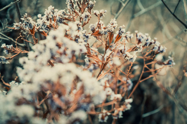 Plant Growth Nature Selective Focus Beauty In Nature Close-up Day No People Tranquility Fragility Vulnerability  Focus On Foreground Flowering Plant Flower Outdoors Land Field Tree Branch Winter Wilted Plant