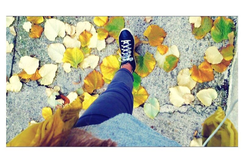 Autumn leaves falling down..
