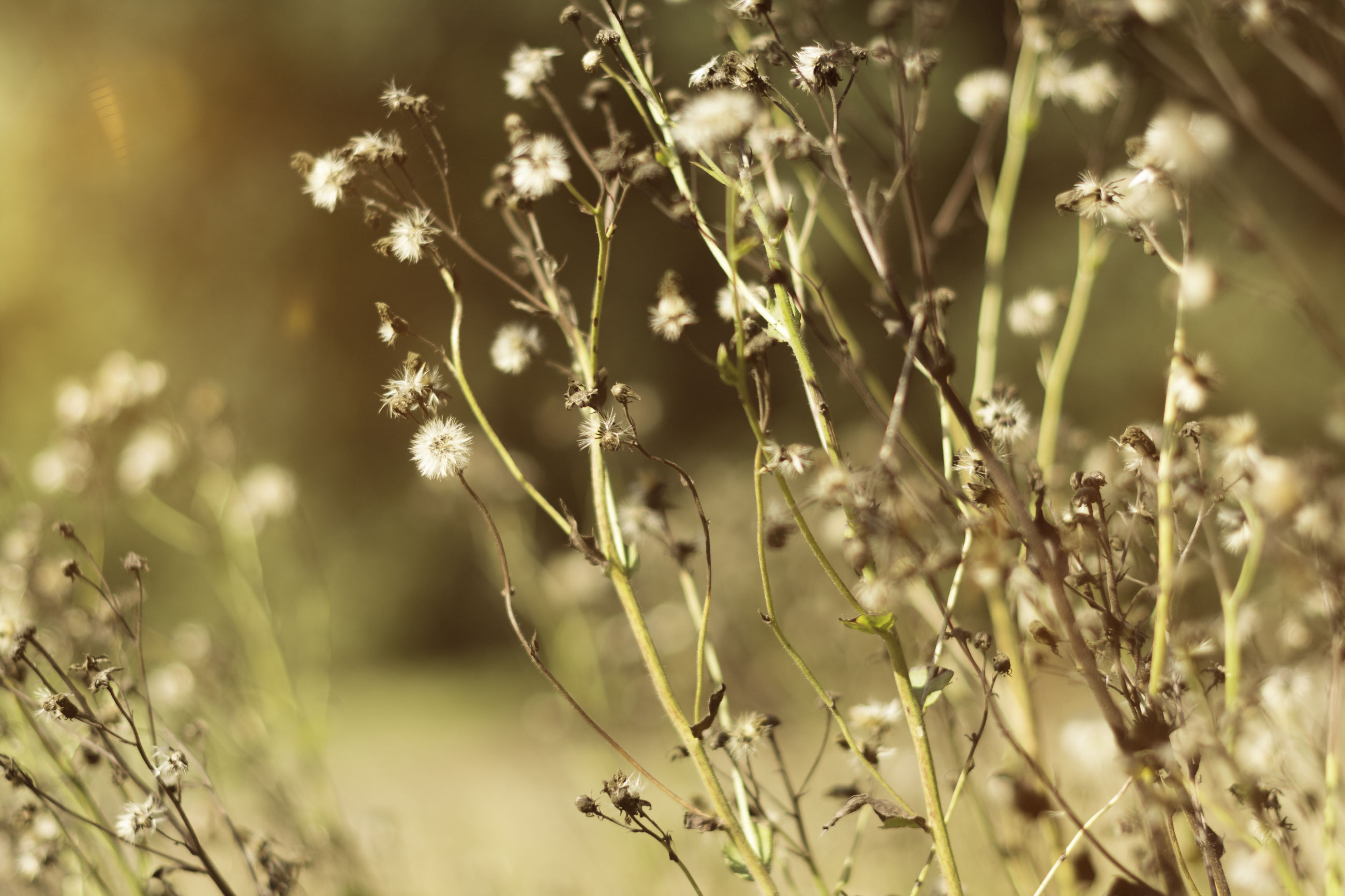 nature, growth, plant, beauty in nature, close-up, tranquility, no people, outdoors, tree, day, grass, timothy grass
