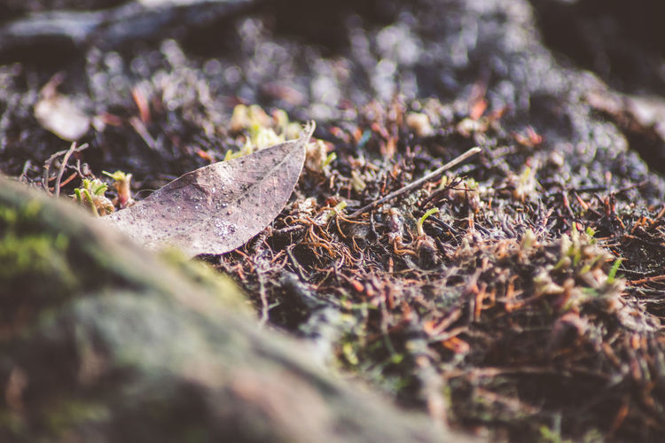 Selective Focus Nature Close-up Plant Plant Part Day Dry Leaf Land No People Field Tree Forest Outdoors Moss Growth Falling Tranquility Ground Beauty In Nature Surface Level Change Leaves Dried EyeEm Nature Lover