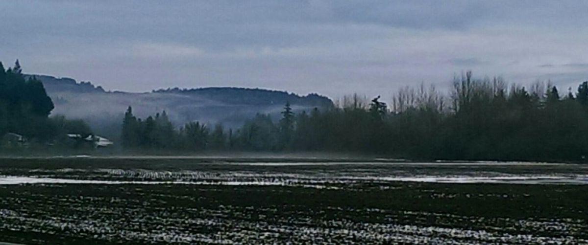 Beautiful Morning Out Walking Nature January