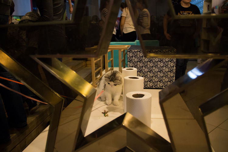 Close-up of cat by tissue paper on table seen through star shape