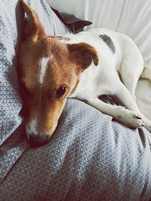 EyeEm Selects Pets Dog One Animal Domestic Animals Animal Themes Mammal
