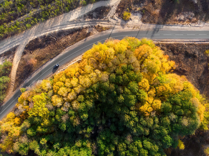 High angle view of yellow flowers on road