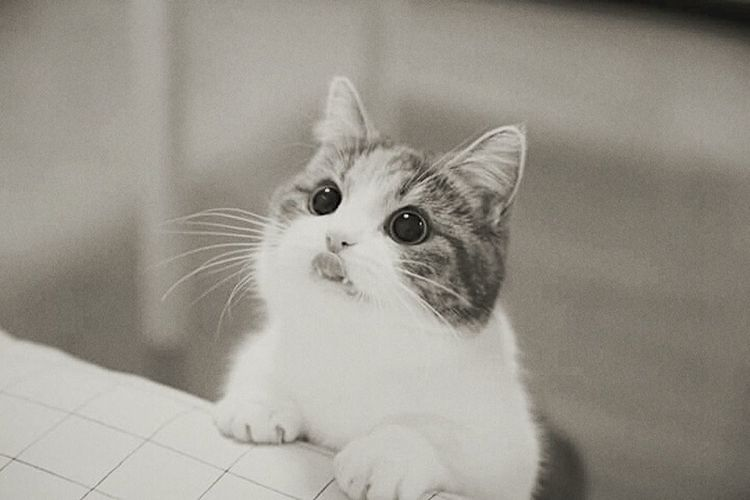 Domestic Cat Pets Domestic Animals Cute Animal Feline One Animal Nose Whisker Kitten Portrait Animal Themes Close-up Day Protruding Making A Face Indoors  No People Ear Sitting First Eyeem Photo