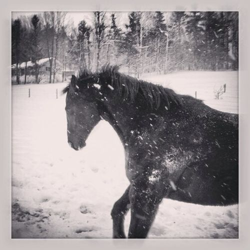 Fredd shows a typical 16 year old's excitement at a surprise snow day… #snow #winter #nh