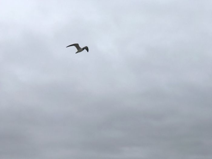 Pleasantville Nj SEAGULL IN FLIGHT Seagull Flying Morning Walks By The Sea Beachphotography Peaceful View IPhoneography IPhone 7 Plus Coldweather