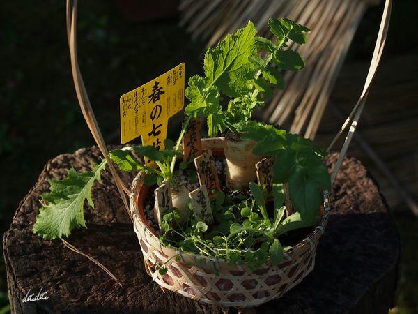 食べた? E-PL3 Vegetable 春の七草 Noedit