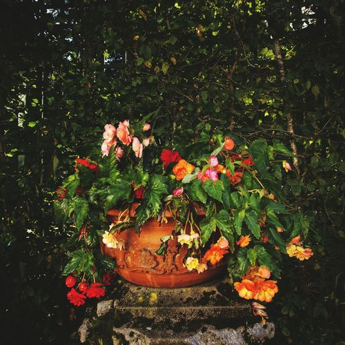 Flower Freshness Growth Fragility Plant Beauty In Nature Nature Petal In Bloom Tranquility Day Springtime Flower Head Botany Blooming Rose - Flower Outdoors Red Plant Life Pink