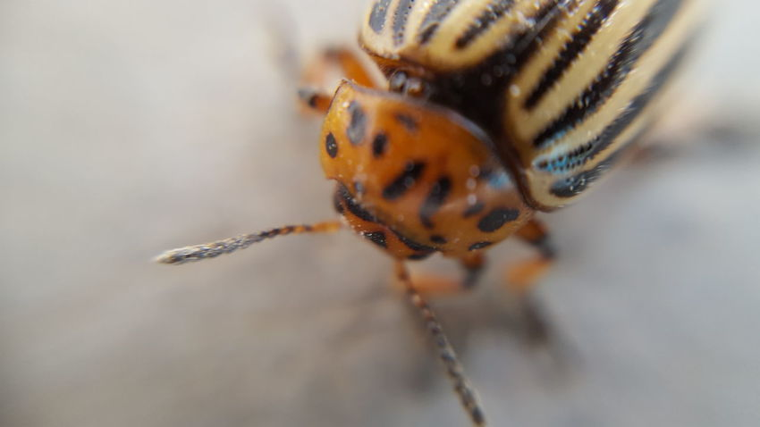 One Animal Animal Themes Insect Animals In The Wild Wildlife Close-up Focus On Foreground Nature Extreme Close-up Animal Antenna Beauty In Nature Day Animal Eye Zoology No People Fragility Animal Markings Extreme Close Up