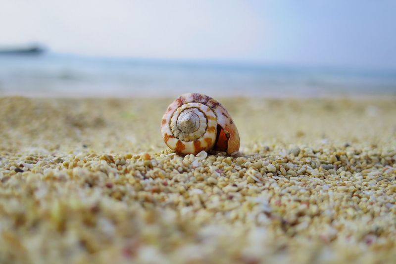 Animal Themes One Animal Selective Focus Animals In The Wild Beach Animal Shell Sand Hermit Crab Close-up Nature Outdoors Animal Wildlife No People Day