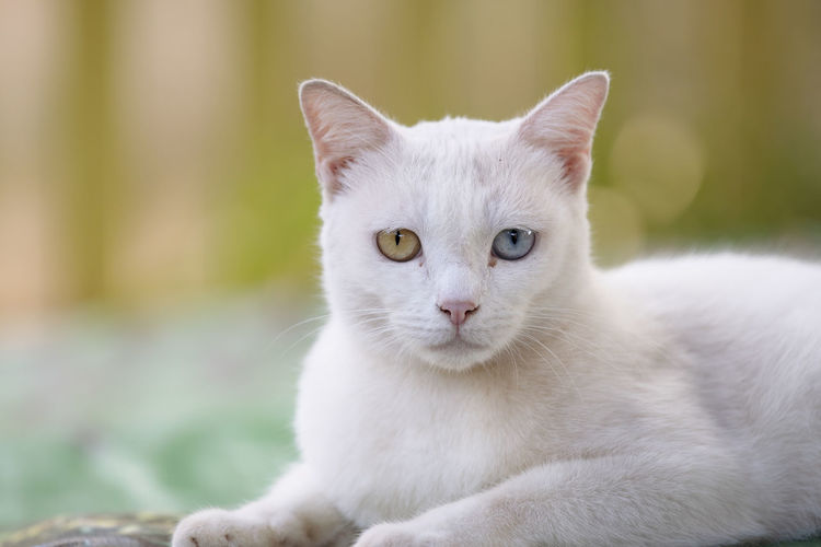 Close up head white cat Cat Domestic Animals Domestic Cat Domestic Pets Mammal Animal Themes Feline Animal One Animal Portrait Vertebrate Looking At Camera Focus On Foreground White Color Whisker No People Sitting Day Close-up Animal Eye