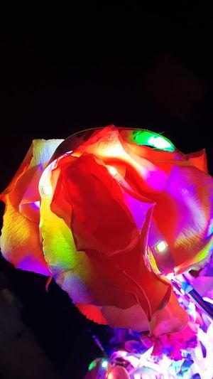 LED Light Roses