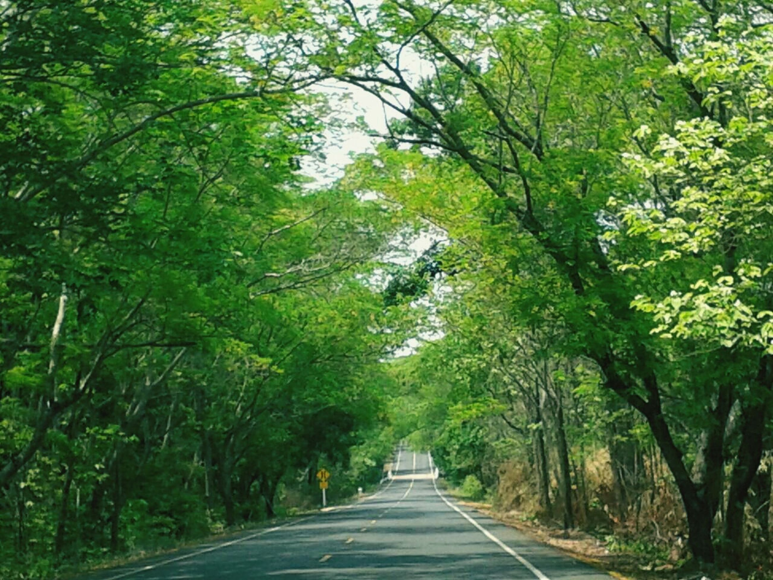 the way forward, tree, diminishing perspective, transportation, vanishing point, road, forest, tranquility, growth, empty road, nature, green color, empty, long, road marking, tranquil scene, country road, treelined, beauty in nature, no people