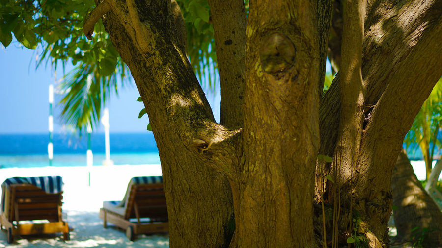 Close-up of bird on tree against sea