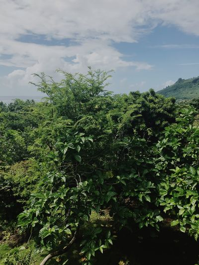 Mountain Sky Plant Nature Green Color Cloud - Sky Outdoors Beauty In Nature Day Tree Moorea Wind