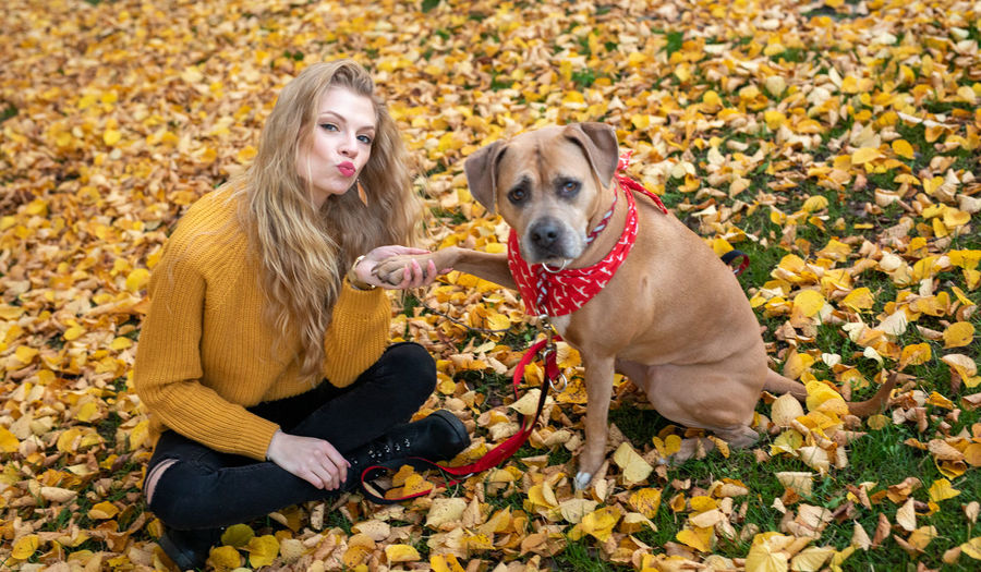 View of a dog sitting on autumn leaves