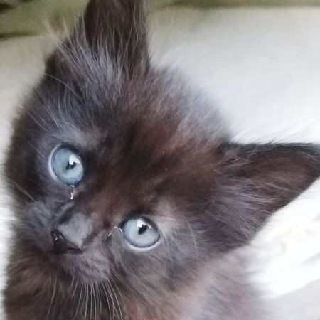 Flipside Cat House Blue Eyes Holy Kitten Yes I Want It♡ Cuteness Adorable Cat Kitty City Pets Portrait Kitten Looking At Camera Feline Domestic Cat Animal Hair Young Animal Close-up