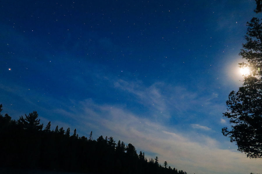 Algonquin Park Algonquinpark Algonquinprovincialpark Astronomy Beauty In Nature Growth Low Angle View Nature Night No People Outdoors Scenics Silhouette Sky Star - Space Tranquil Scene Tranquility Tree