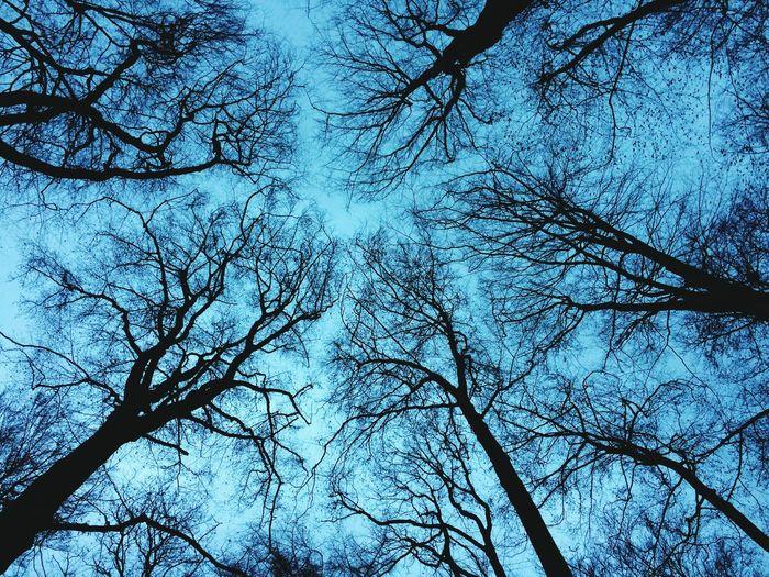 Trees Landscape Cloud - Sky