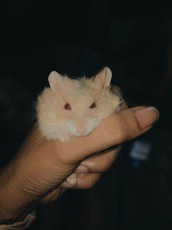 Stress reliever .. Hammy Love Pet Photography  Instagood Instapic Hamster Love