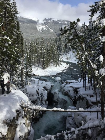 Canadian Rockies  Waterfall Canada IPhoneography Sunwapta Falls Tree Plant Winter Cold Temperature Nature Sky Water Cloud - Sky Snow Beauty In Nature Day Tranquility No People Scenics - Nature Tranquil Scene Land Outdoors Growth Snowcapped Mountain Coniferous Tree