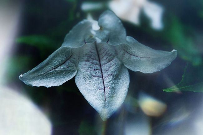 depth of field Interesting Contrast Awesome Flower Flower Head Flowers Flowers_collection Flower Photography No People Nature Close-up Fragility Beauty In Nature Plant Day Leaf Outdoors Flower