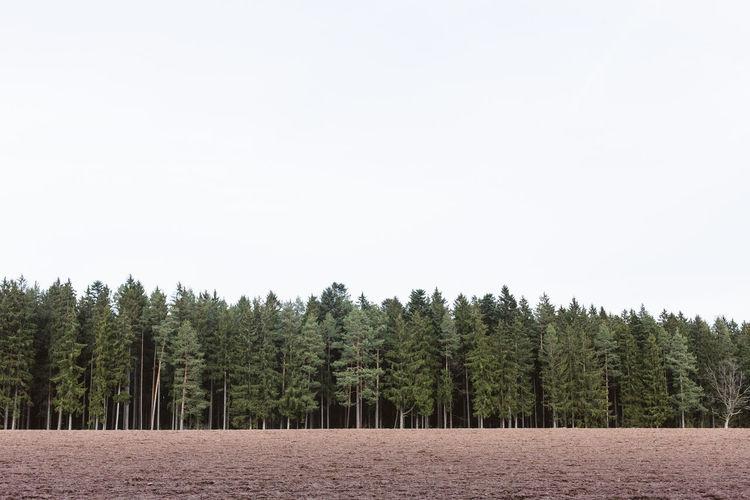 Tree Plant Copy