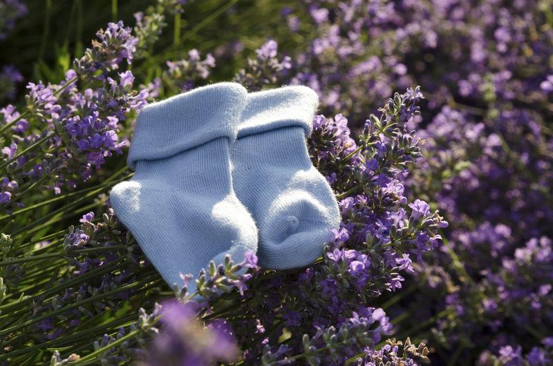 Blue baby socks on lavender