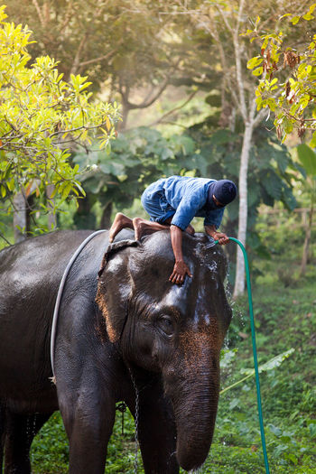 Man Cleaning Elephant On Field