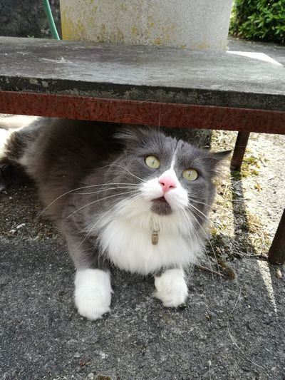 One Animal Animal Themes Pets Domestic Animals Domestic Cat No People Miau *-*  Neko Kot Gatto Cat♡ I Love My Cat ❤ Love My Cat❤❤❤🐱🐱🐱 In The Garden Feline Streamzoofamily TheVille Looking At Camera Crazy Cat Outdoor Games Cats Of EyeEm Cat Lovers
