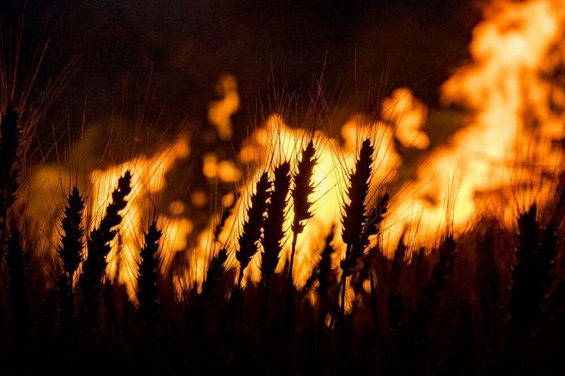 Midsummer fire and corn Sony A7mk2 Enjoying Life Sonnwendfeier Sonnwendfeuer Fire The Great Outdoors - 2015 EyeEm Awards