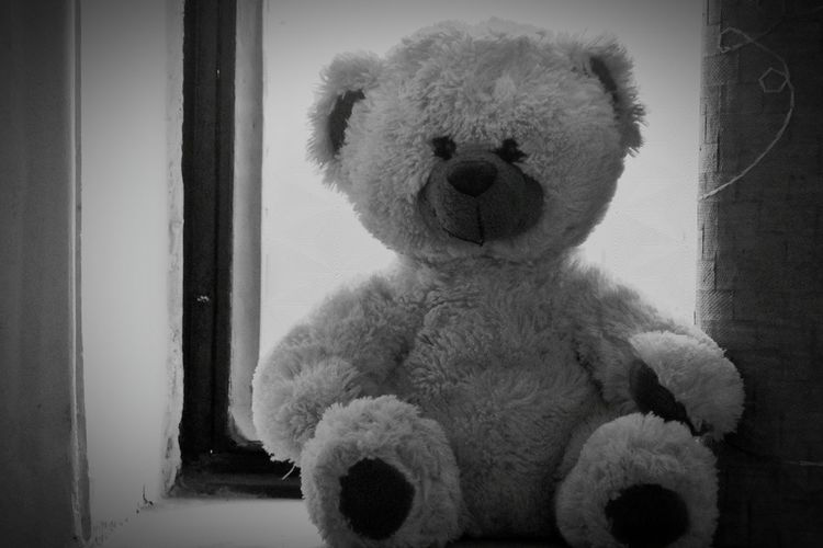 Teddy Bear Stuffed Toy Toy Childhood Abandoned No People Day Houses And Windows Teddybear Householdphotography Ameturephotography Blackandwhite Bnw Bear Toyphotography Children