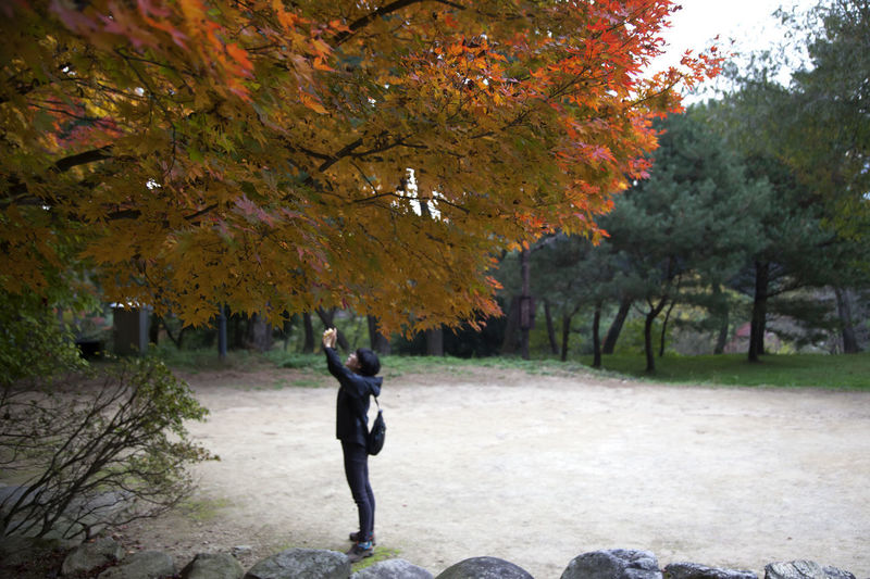 autumn at Gochang Eupseong in Jeonbuk, South Korea Fall Beauty Tranquility Autumn Autumn Color Beauty In Nature Casual Clothing Change Day Fall Full Length Gochang Growth Leaf Lifestyles Nature One Person Outdoors People Real People Rear View Scenics Tree Walking