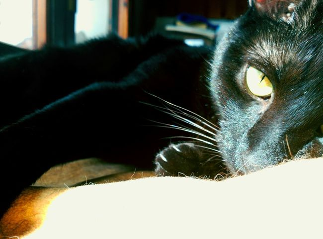 Titecio I Ilovemycat Ilovecats Catstar #cat #catnap #catoftheday #catpic #catlovers #catsconnect #catinstagram #catsofinstagram #gato #gatinhos #gatto #garfield #petstagram #premierpet #photooftheday #petsofinstagram #picoftheday #petlovers #instabicho #ilovecats #ilovemypet #issovici Gattonero Gatnegre BLackCat Gattogram Gatto😸 Gatonismo Gats :))