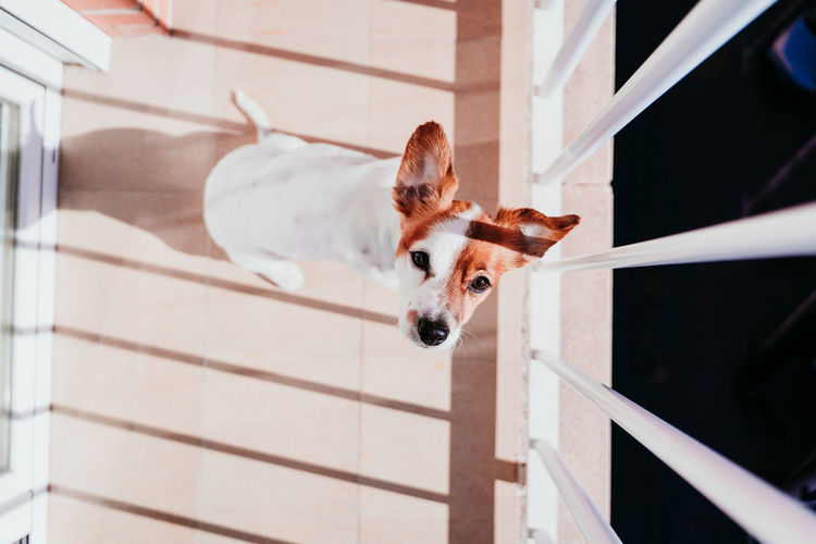 Portrait of dog in balcony