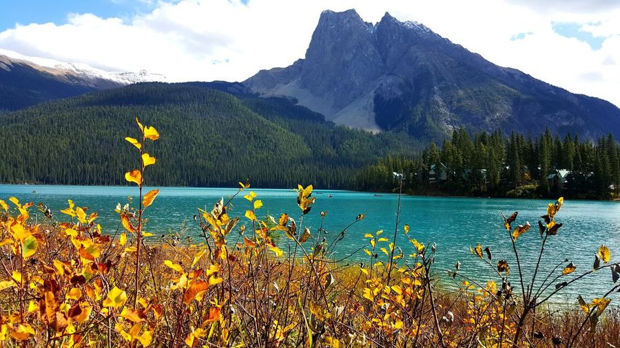 Mountain Water Mountain Range Yellow Scenics Tranquil Scene Beauty In Nature Majestic Nature Non-urban Scene Tranquility Mountain Peak Sky Growth Day Outdoors Vacations Tourism Physical Geography Vibrant Color Fall Season  Idyllic