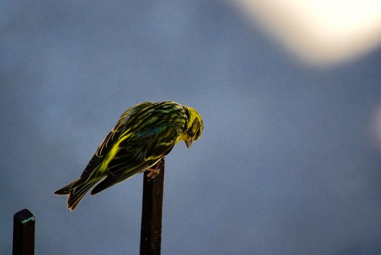 Low angle view of bird perching on leaf against sky