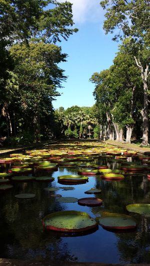 Botanic gardens Mauritius