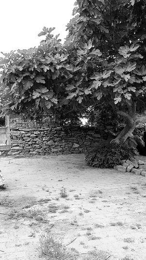 Black & White Tree Beauty In Nature Non-urban Scene