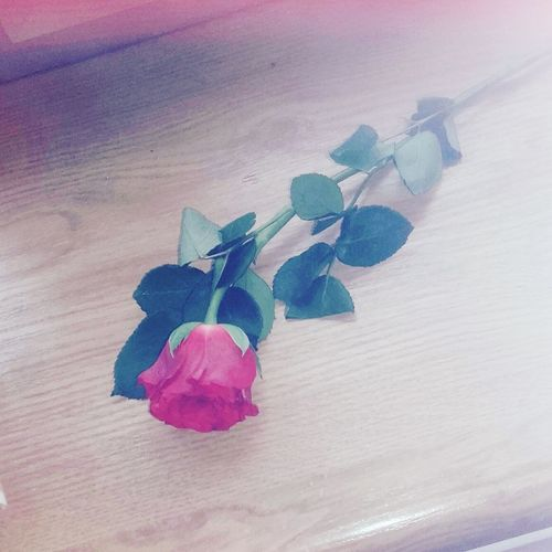 Blume ...schon Wieder! Blume Rot Flower Relaxing Hi! Enjoying Life 2016 Hello World Nice 😚 Flower Red Love ♥ Sister ❤ Happy *