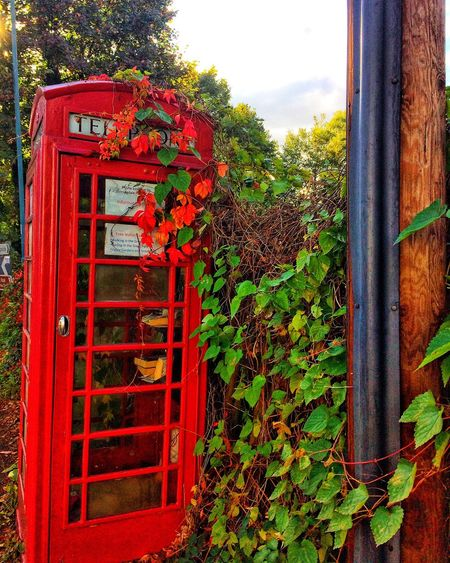 Once upon a time EyeEm Best Shots EyeEm Gallery Phone Booth Communication Text Nature Plant Red Day No People Western Script Telephone Growth Outdoors
