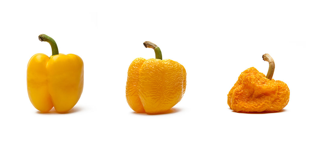 yellow bell pepper aging isolated on white background Bell Eating Food And Drink Freshness Freshnesss Isolated Still Life Photography Aged Aging Communication Conceptual Cut Out Food Foodporn Healthy Healthy Eating Moulder Pepper Pepper Bells Peppers Time Vegetable Waste Wrinkles Yellow