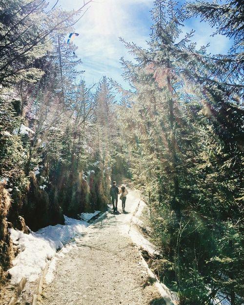We walk Rigi Rigikulm Switzerland Walk Hike Mountain Mountain View m