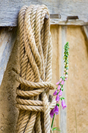Digitalis Purpurea Medieval Medieval Architecture Pink Flower Purple Flower Wooden Post Rope Close-up Wooden Tied Knot Plank Wood